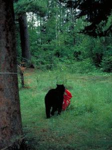 bear_carrying_off_backpack.jpg