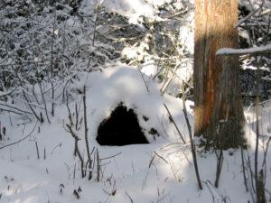 Black Bear Den