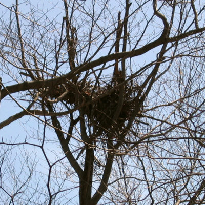 feeding_bear-nest_beech2_450x600.jpg