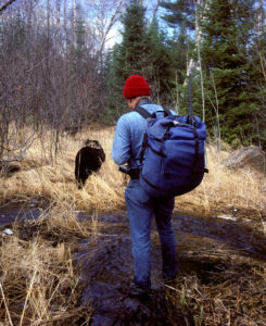 Researcher walking with bears