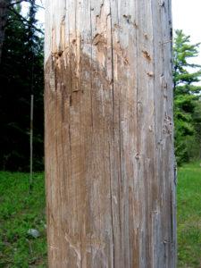 Mud on Utility Pole