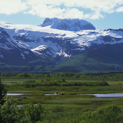<h2>Alaska beauty</h2><p>Grizzly bears see some of the finest scenery in the world.</p>
