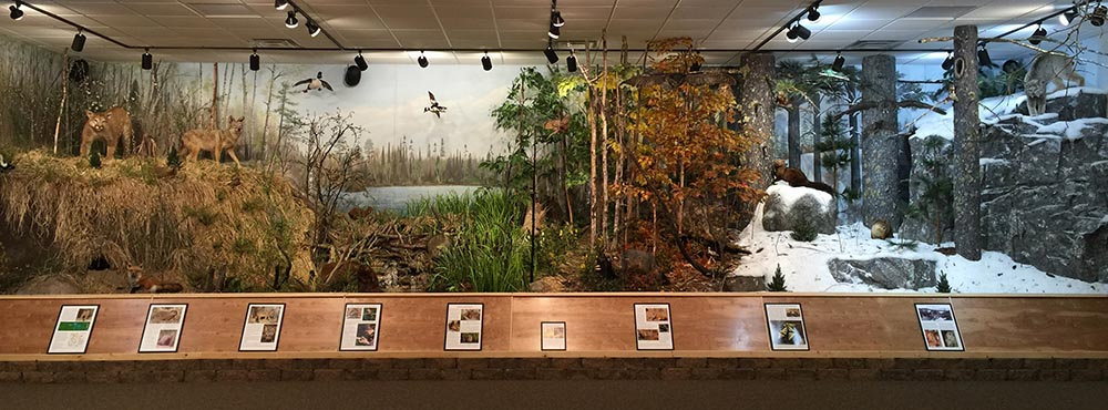 NABC Northwoods Ecology Hall Exhibit