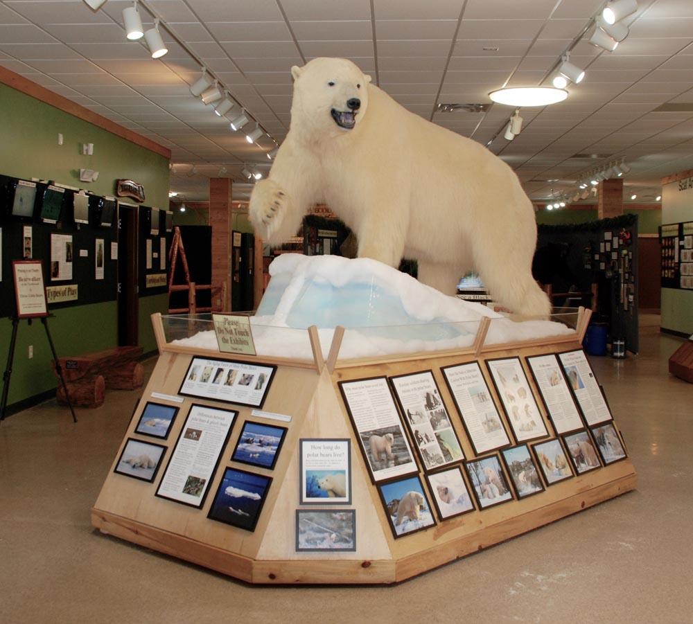 NABC Polar Bear