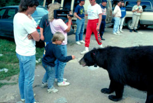 bear_with_crowd.jpg