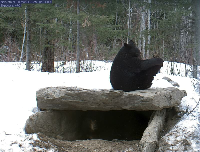 Lucky sitting on top of den doing yoga