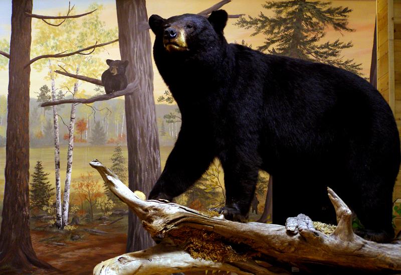 black_bear_mount_mural.jpg