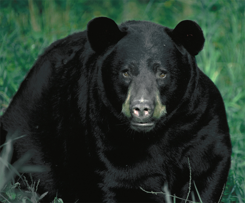 bear_facing.jpg
