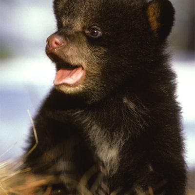 cute_cub.jpg