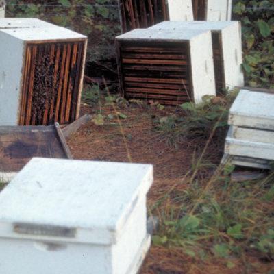 feeding_bees_honeybee_800x600.jpg