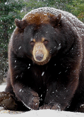 Honey in Snow