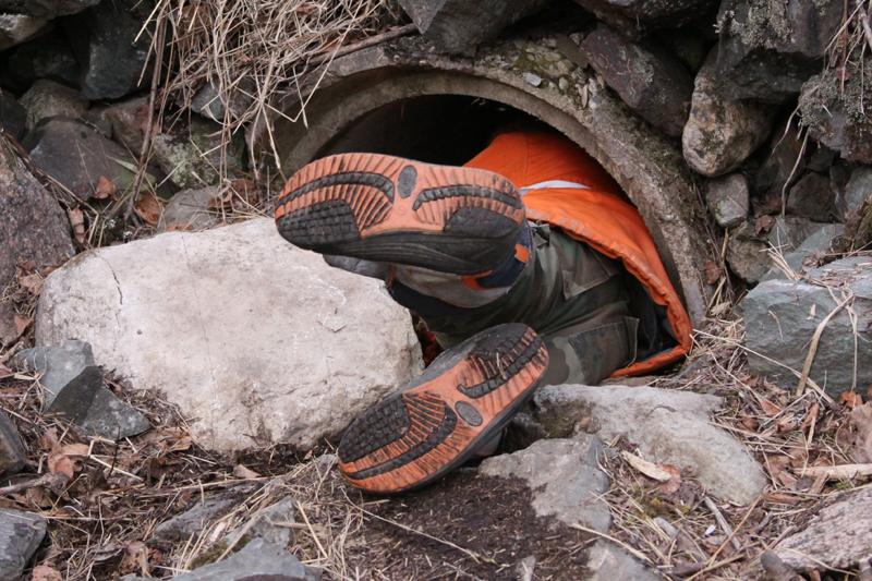 Eli crawling into Jo's culvert den - March 29, 2010