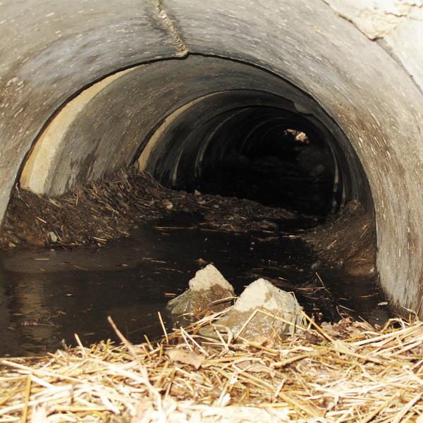 Jo's empty den - March 24, 2010