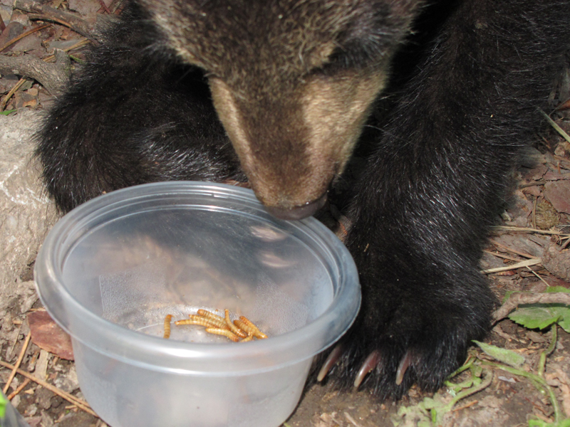 Hope eating mealworms - June 7, 2010