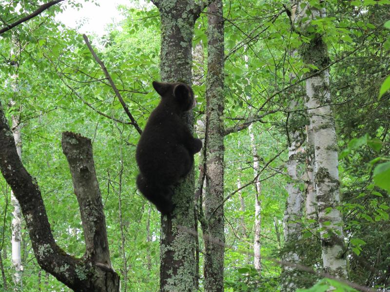 Hope scampering up tree - June 5, 2010
