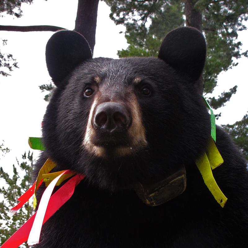 Jo bear - September 9, 2010