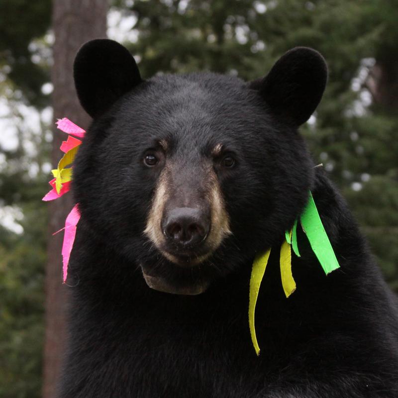 Jo bear - Sept 11, 2010