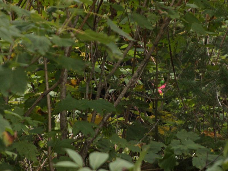Jo in bushes - September 11, 2010