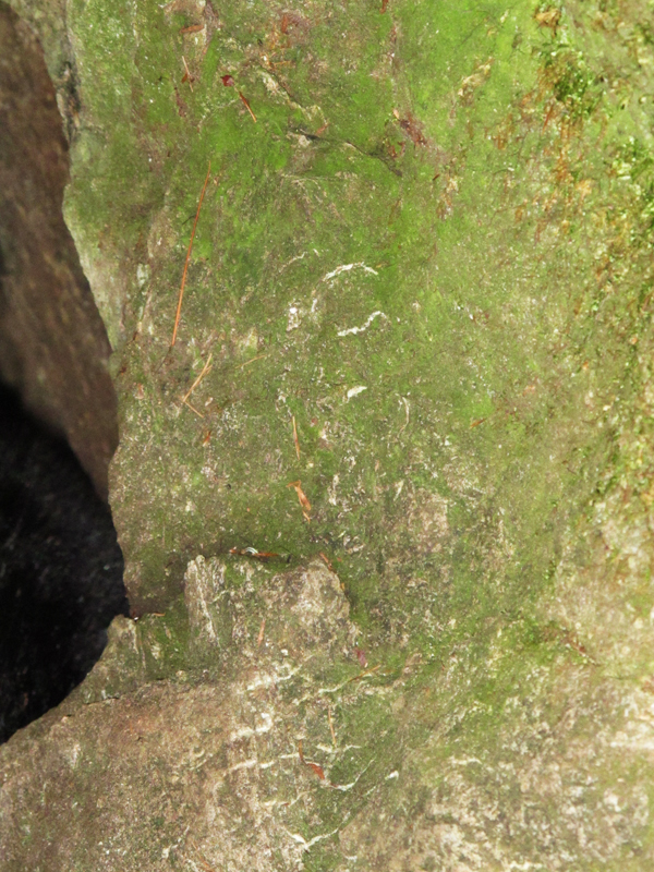 claw marks on rock den wall - Sept 14, 2010