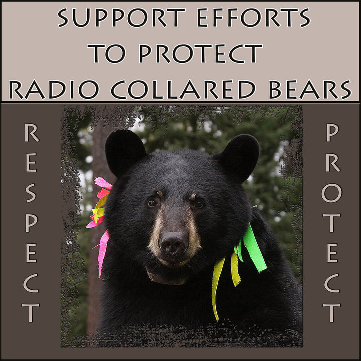 protect_radio-collared_bears_poster