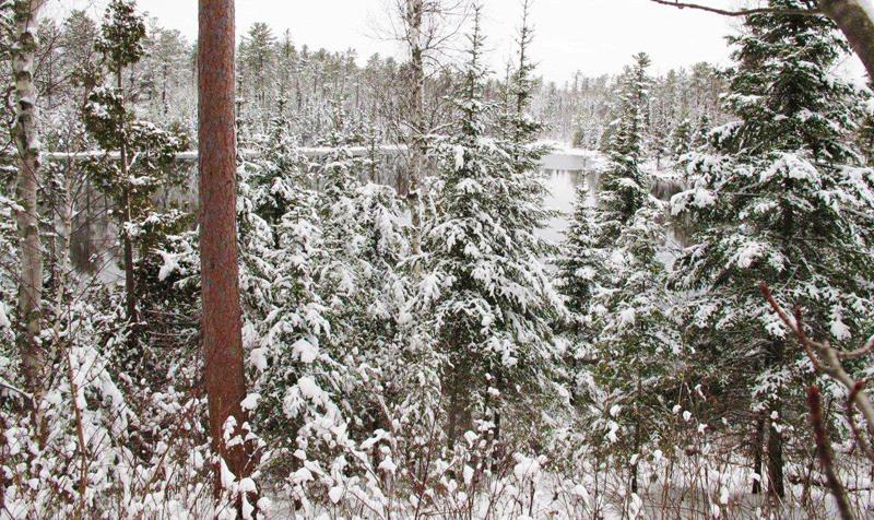 Woods_Lake_11-15-10_2_800