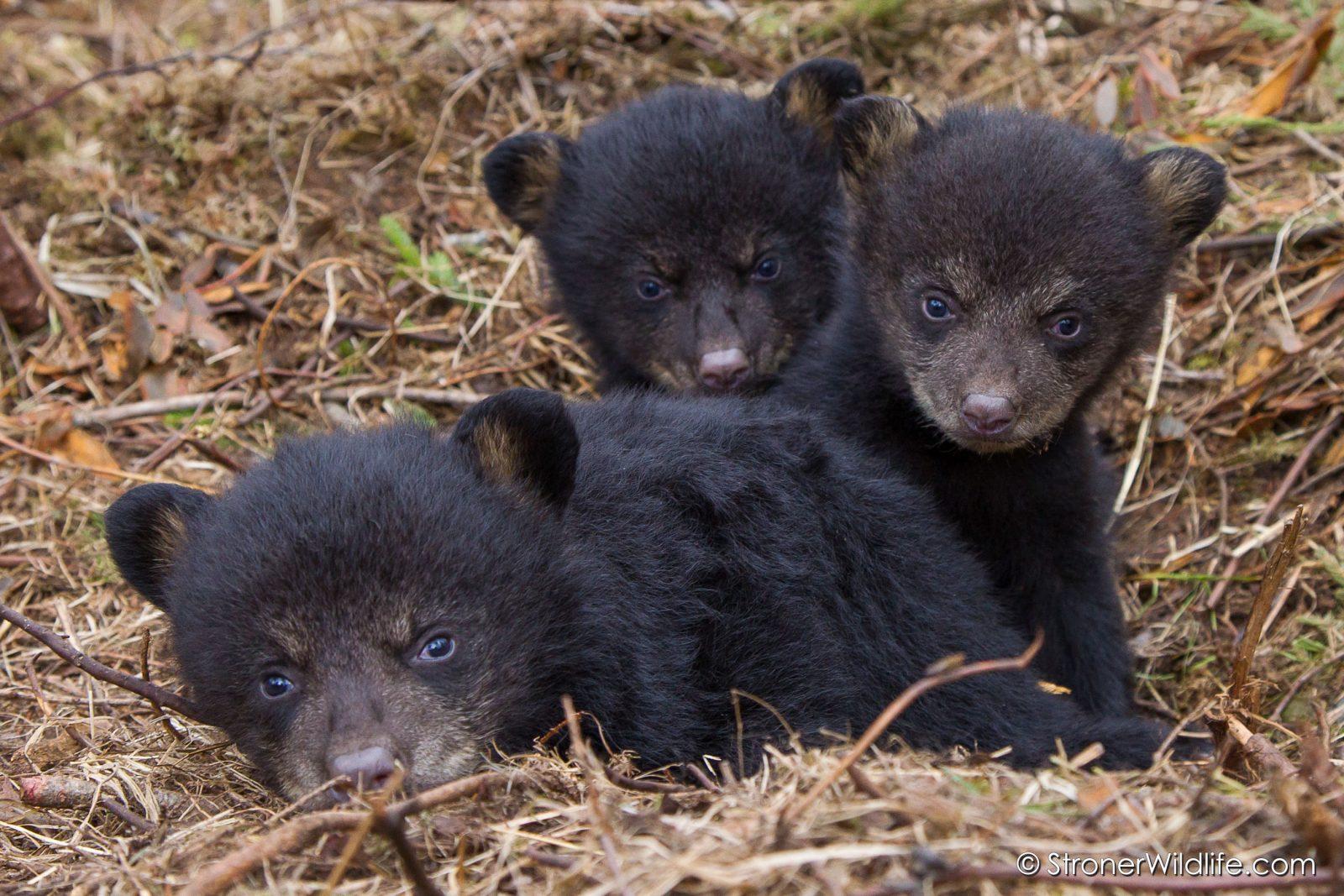 2012 Juliets Cubs