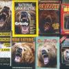 Scary Bear Magazines
