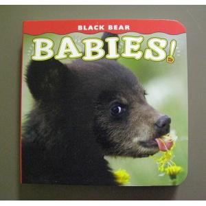 Black Bear Babies