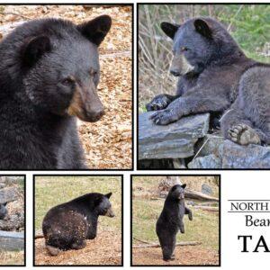 Postcard Tasha