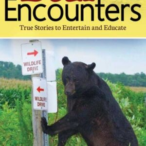 Bear Encounters
