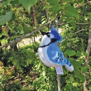 Blue Jay Songbird