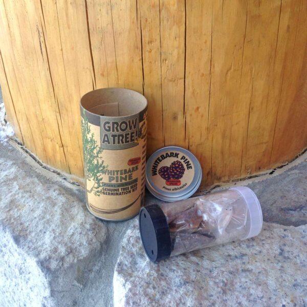 Whitebark Pine Growing Kit