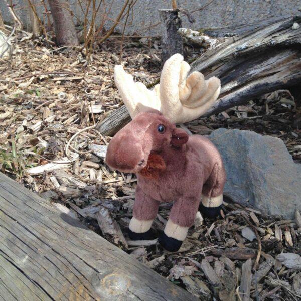 Mini Moose