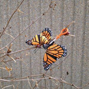 Monarch Clip
