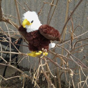 Mini Bald Eagle
