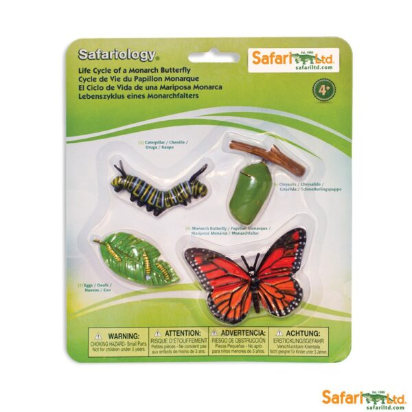 Life Cycle of a Monarch