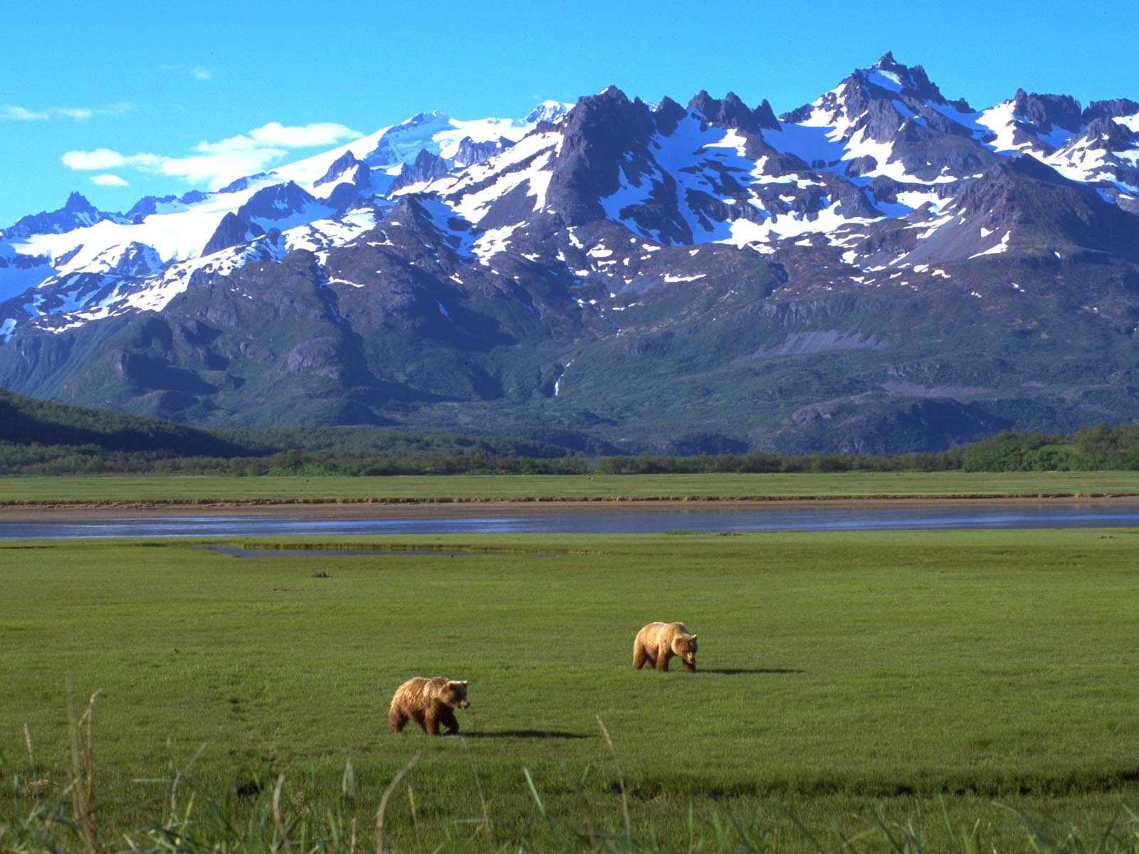 Grizzly gathering place