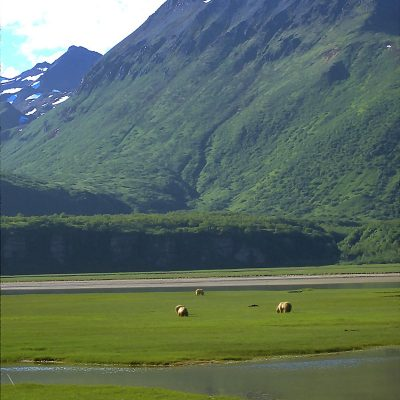 <h2>Saltwater Sedge Flat</h2> <p>Coastal sedge flats are rich feeding areas for coastal grizzlies in Alaska in late spring and summer. </p>