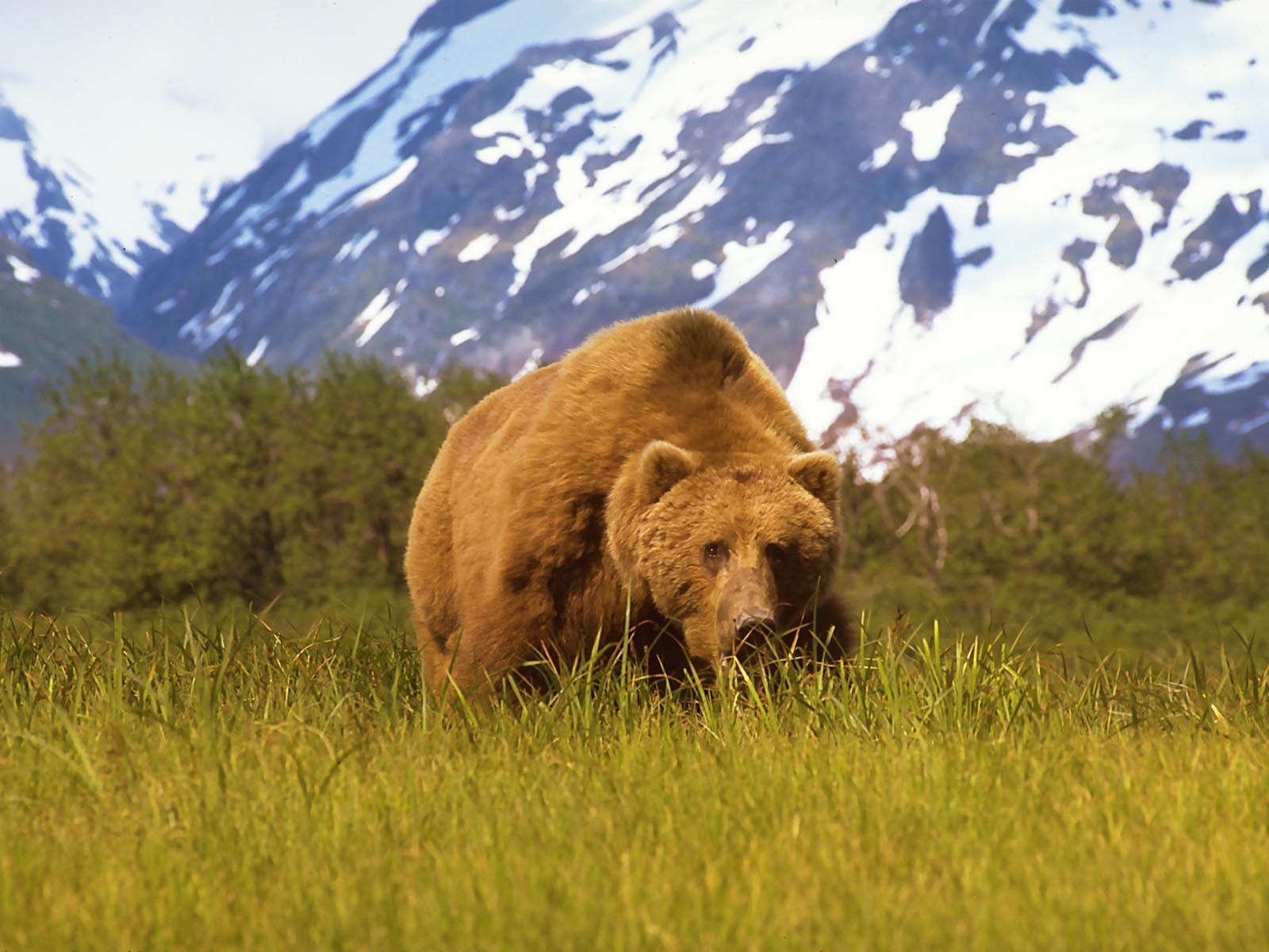 A mountain of a bear