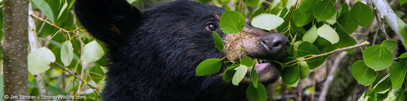 Animal Protein - North American Bear CenterNorth American
