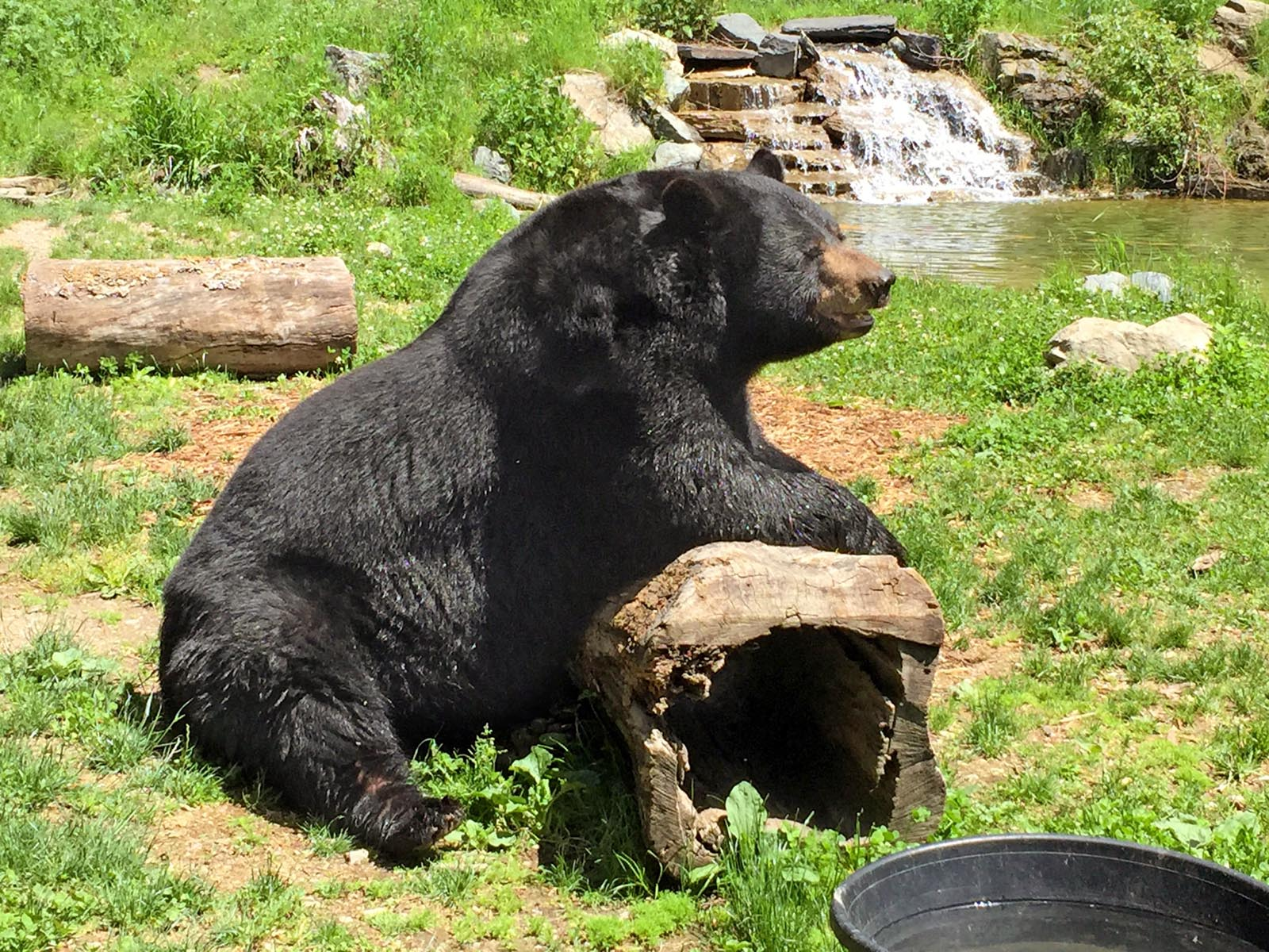 Our bears and their Habitat - North American Bear CenterNorth ...