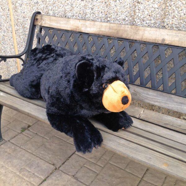 Laying Down Medium Black Bear