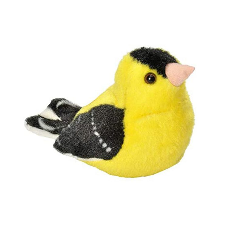 American Goldfinch Songbird
